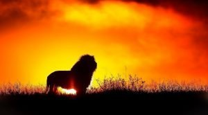 Jesus Christ the Lion of Judah in dreams and Visions